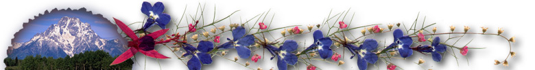 Beautiful Dried Flower and Pressed Flower Artwork